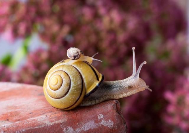 Marsala - Shutterstock