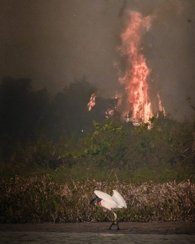 Dia do Pantanal - Áreas Que Protegem a Vida - Mata pegando fogo